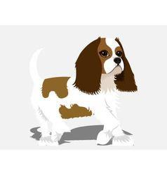 spaniel dog vector image