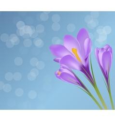 Crocus flower background vector
