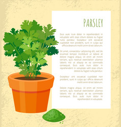 Parsley poster and text sample vector