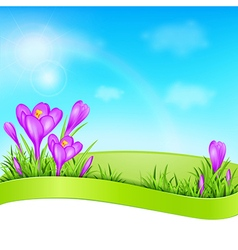 Spring background with violet crocus vector