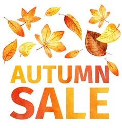 autumn leaves Autumn sale watercolor vector image