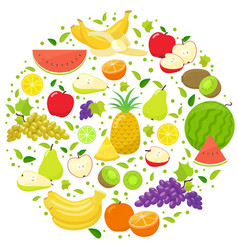 fruits round template vector image