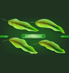 tropical leaves leaf set isolated on green vector image