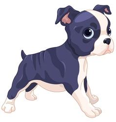 Boston Terrier Cub vector image vector image