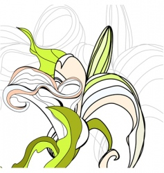 lily calla flowers vector image vector image
