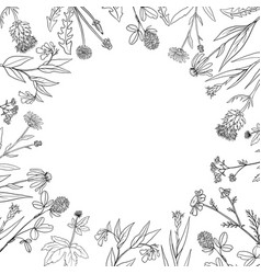 round frame with medical plants vector image vector image