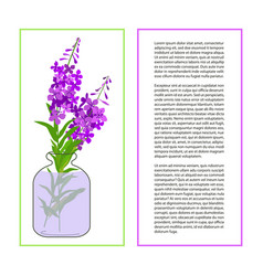 Card with fireweed flower vector