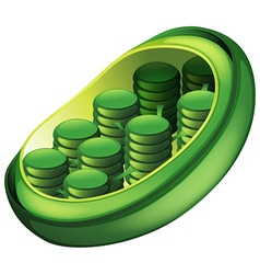 Chloroplast vector image