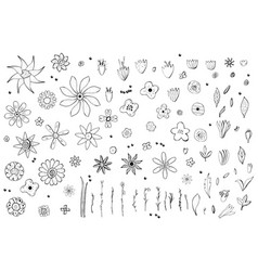 Flowers composition vector