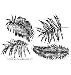 set hand drawn black and white tropical vector image