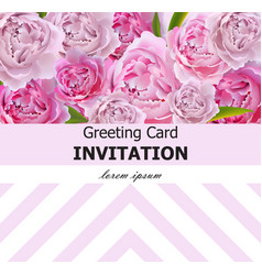 Peony flowers greeting card pink flowers vector