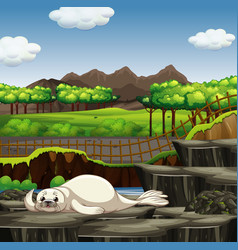 scene with seal in zoo vector image