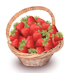 strawberry fresh fruits in a basket vector image