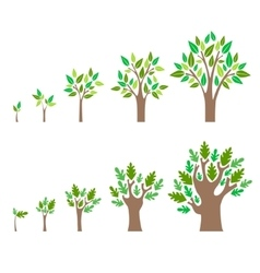 Stage Growth of a Tree Set vector image vector image