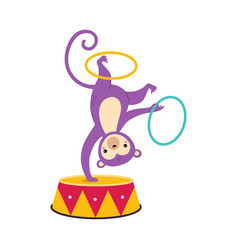 Circus monkey animal somersaulting on drum with vector