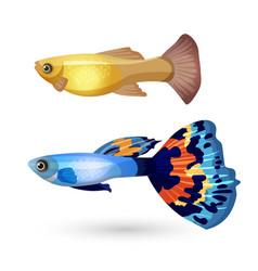 Fish poecilia reticulata and carp isolated vector