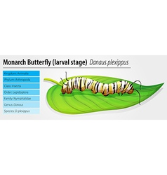 Monarch butterfly - Danaus plexippus - larva stage vector