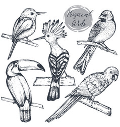collection of sketch exotic tropical birds vector image vector image