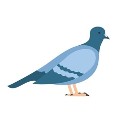 flat bird isolated on white background beautiful vector image vector image