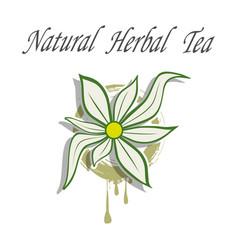 Natural herbal tea vector