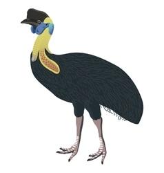 Southern cassowary bird detalised on white vector