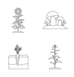 Sunflower mushrooms and other vegetablesplant vector