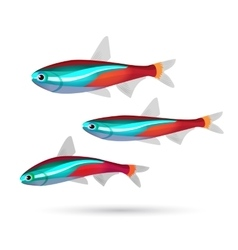 Tropical aquarium fish on white background Neon vector