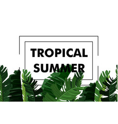 tropical design with exotic palm leaves vector image