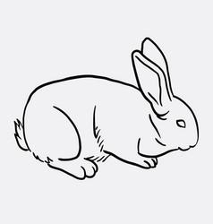 rabbit pet animal sketch vector image