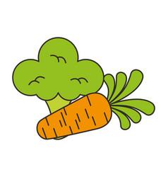fresh organic broccoli and carrot vector image