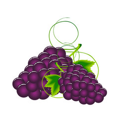 fruit icon grape white background image vector image