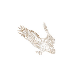 hand drawn eagle bird falcon vector image