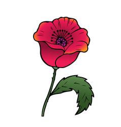 Oriental red poppy vector