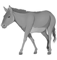 A grey donkey vector
