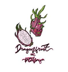 dragonfruit vector image