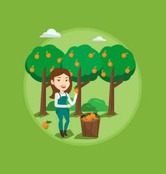 Farmer collecting oranges vector