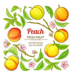 peach elements set vector image