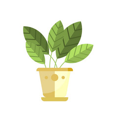 spathiphyllum house plant indoor flower in pot vector image