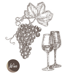 bunch of grapes and wine glasses in vector image