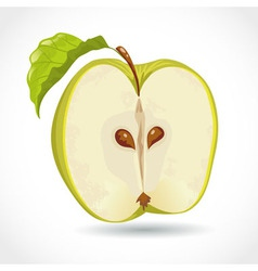 Fresh ripe green apple isolated on white vector