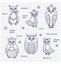 Sketch owls Hand-draw vector image vector image