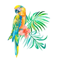 Tropical birds isolated on white background vector image vector image