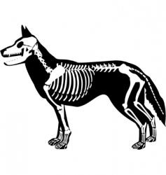 x-ray dog vector image