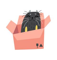 black funny cat sitting in cardboard box cute vector image