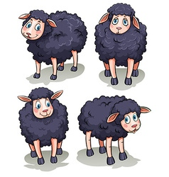 Four sheeps vector
