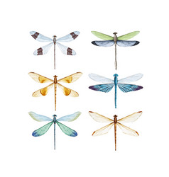 Watercolor dragonfly set vector