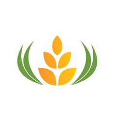 Wheat abstract food tree logo vector