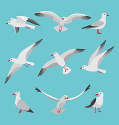 set of atlantic seagulls in cartoon vector image