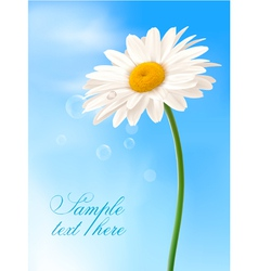 Beautiful white daisy vector