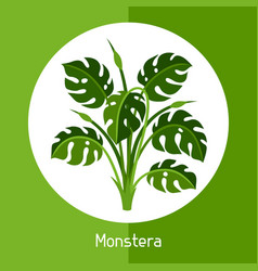 Monstera exotic tropical plant or vector